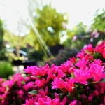 28th May bank Holiday Monday front garden (3)