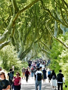 7th_July_2019_The_Dark_Hedges__(12)